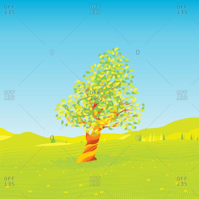Tree in a field in summer