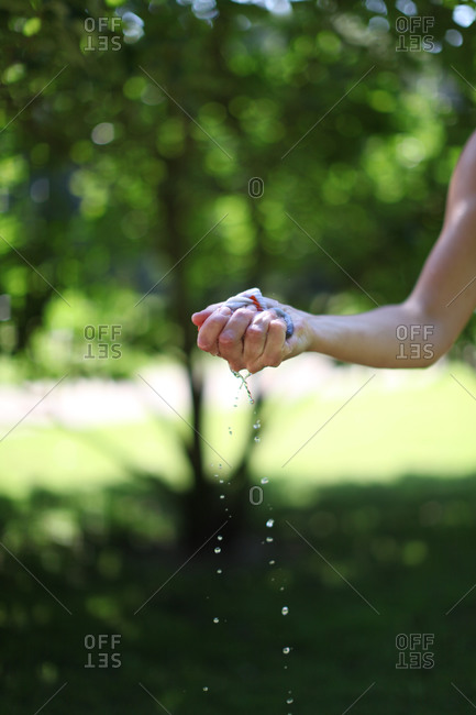 Woman's hand squeezing water from cloth