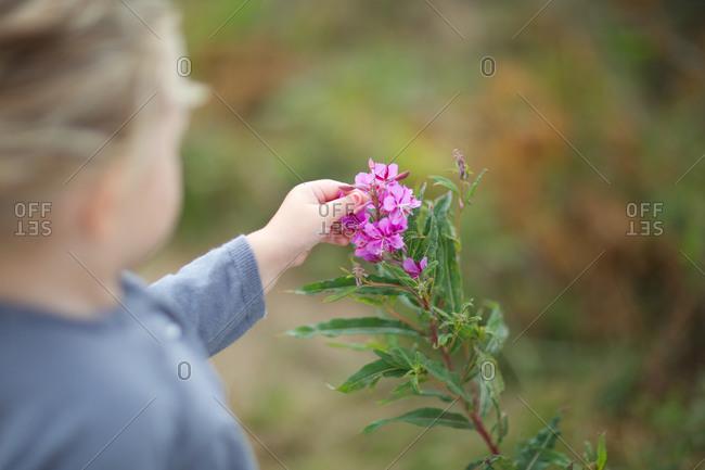 Child touching fuchsia flower