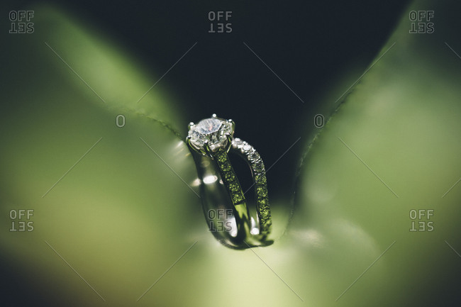 Wedding rings on a green backdrop