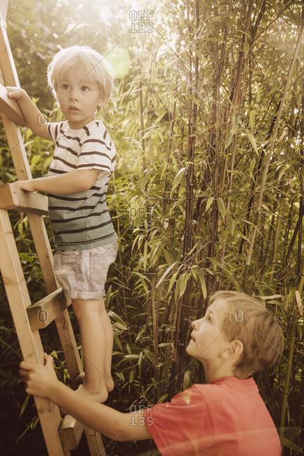 Two boys climbing up a wooden ladder in a bamboo garden