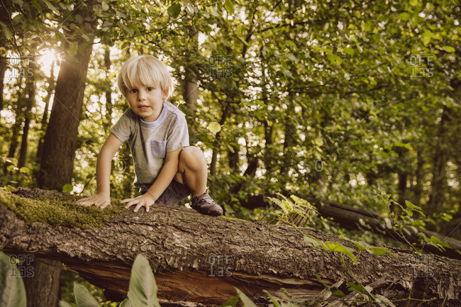 Boy climbing along fallen tree in forest