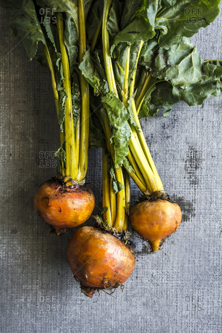 Fresh picked golden beets with greens attached