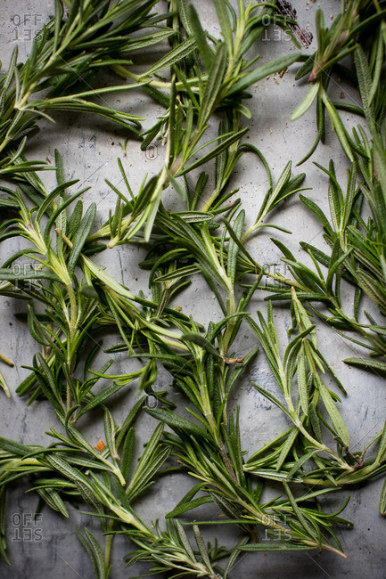 Close up of rosemary herb sprigs