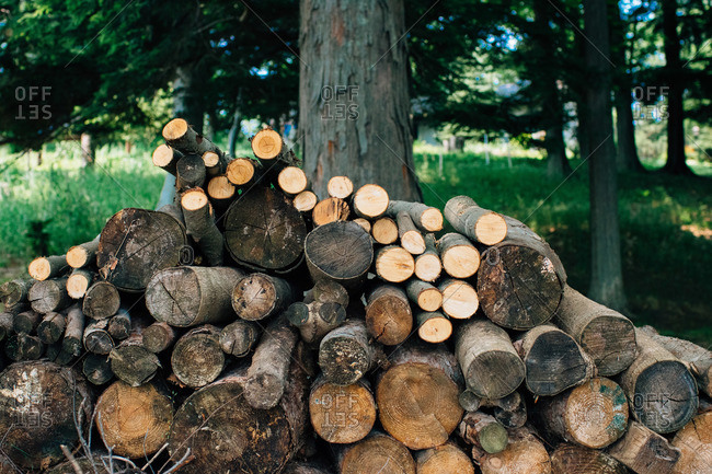 Stack of firewood in rural setting
