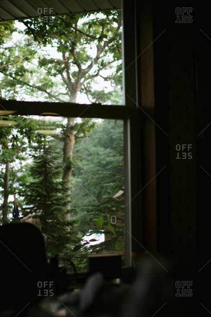 Window with a rural wooded view