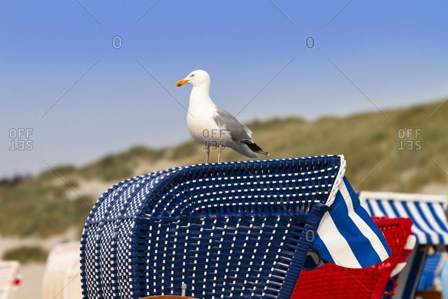Seagull on a woven beach chair