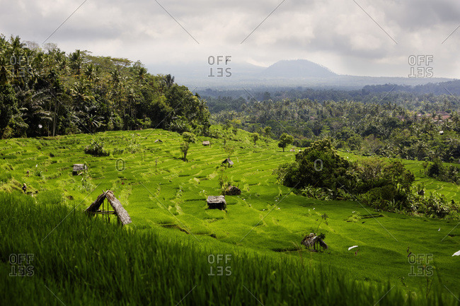 Rice paddies and huts in Bali, Indonesia