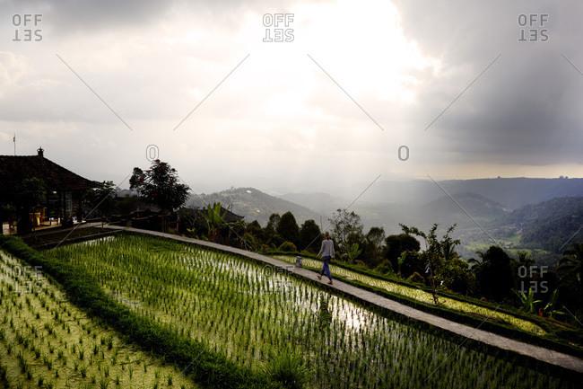 Woman walking between rice paddies in Bali, Indonesia