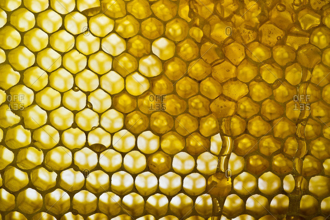 Honeycomb with dripping honey