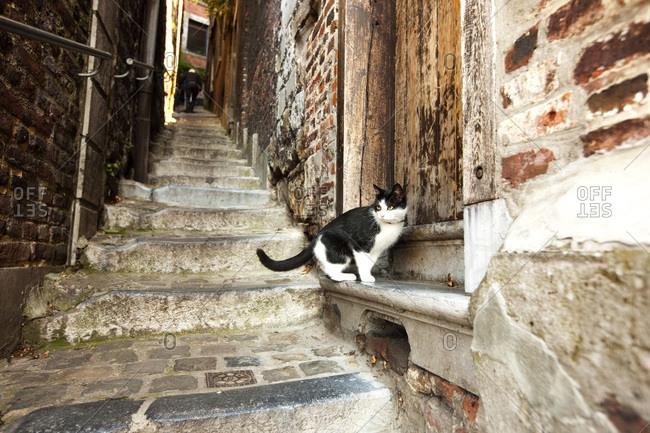 Cat sitting on narrow stone steps