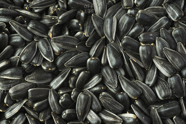 A pile of high oil, commercial, sunflower seeds after harvest