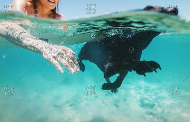 Woman and her pet Labrador swimming together in Bolonia, Tarifa, Costa de la Luz, Andalusia, Spain
