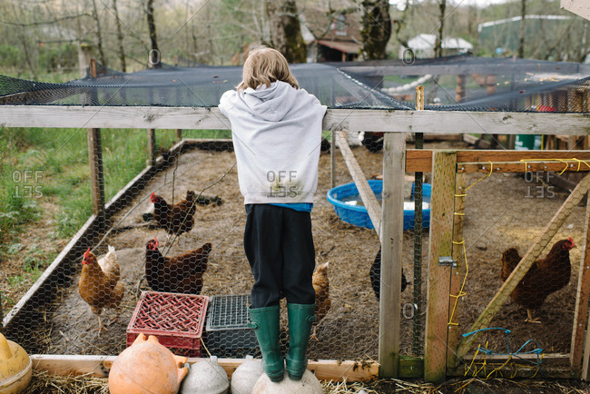 A boy looks at chickens in a coop