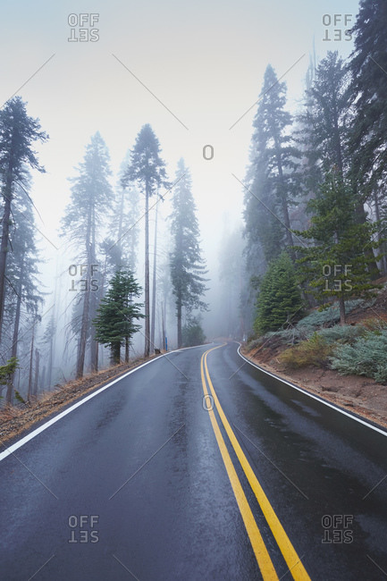 Road through mountain forest