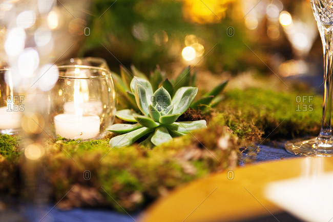 Succulent plant and candles on wedding table