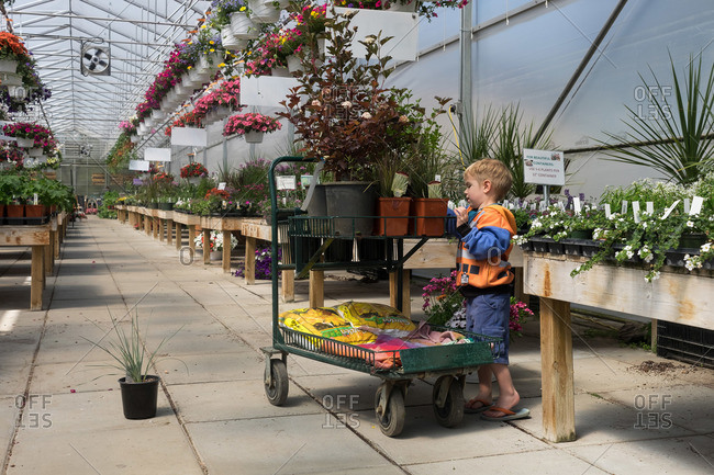 A boy helps shop for plants in a greenhouse
