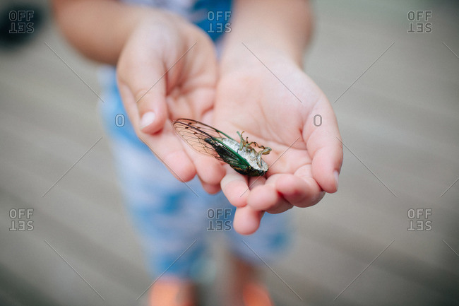 A little boy holds a cicada