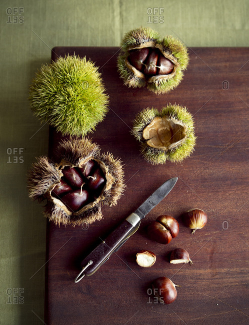 Fresh picked chestnuts and a knife on a cutting board