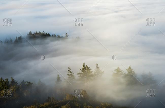 Morning sun lights up the fog in Astoria, Oregon