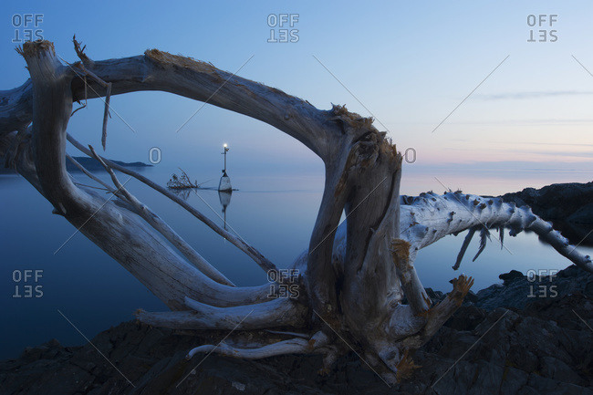 Driftwood at sunrise in a calm lake in Ontario, Canada