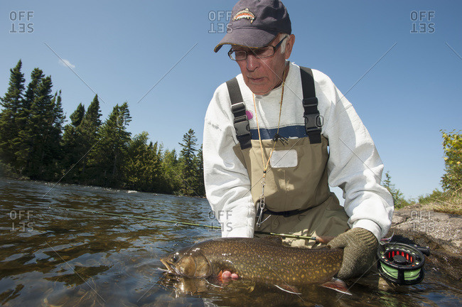 Angler releasing a large brook trout (Salvelinus fontinalis) in Ontario, Canada