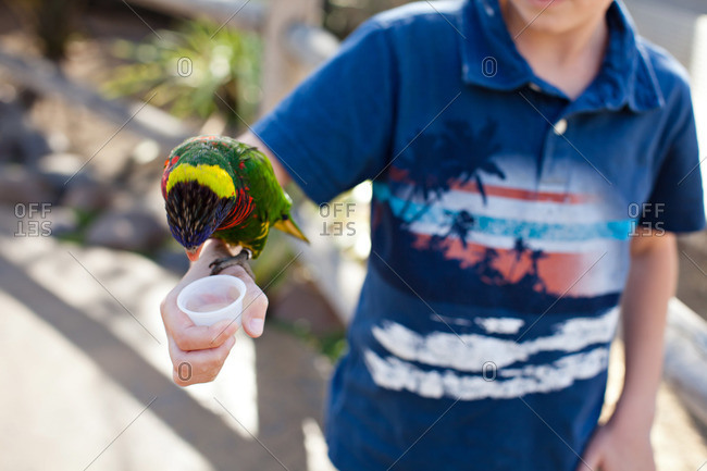 Boy feeding a parrot perched on his arm