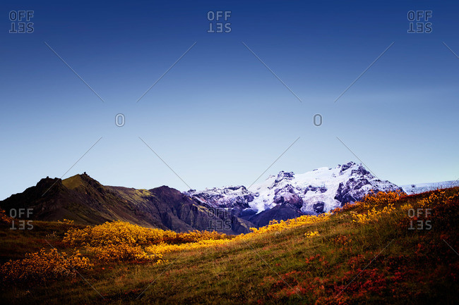 Snowy Icelandic peaks behind wildflower field