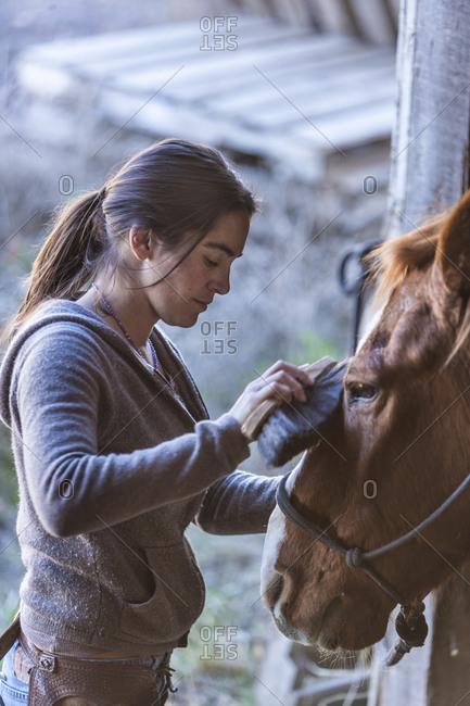 Horse wrangler grooming a horse
