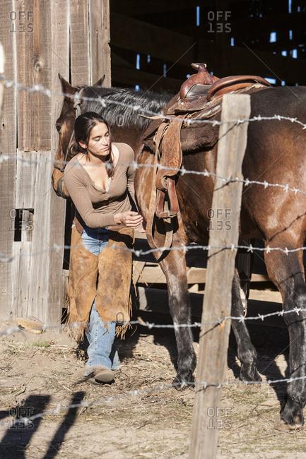 Wrangler putting saddle on a horse
