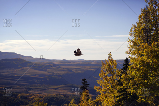 Bird soaring over mountainous scenery