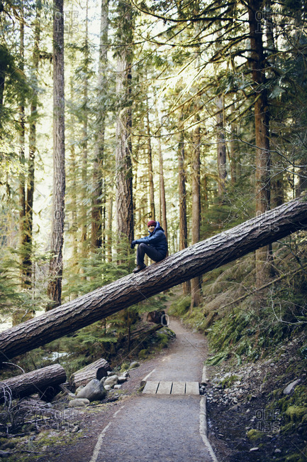 Man sitting on a tree fallen over forest trail