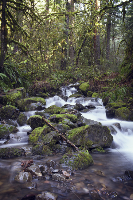 Water running over rocks in forest stream