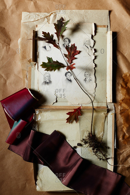 Oak tree seedling, wide ribbon, etched portraits and parchment papers