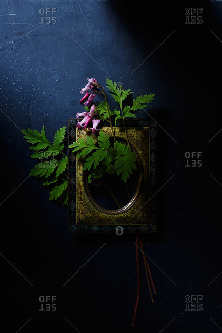 Bleeding heart flowers, leaves and antique picture frame