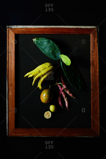 Prickly pear cactus, Buda hand citrus, red speckled bean pods, guava, passion fruit and artist's stretcher frame on black background