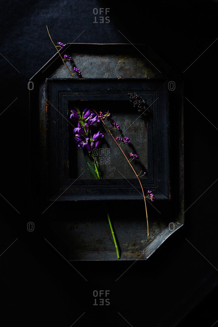 Penstemon flowers, callicarpa berries, chokecherries, picture frame and antique tray on black background