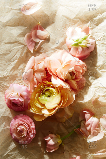 Yellow and pink garden rose blossoms on tissue paper surface