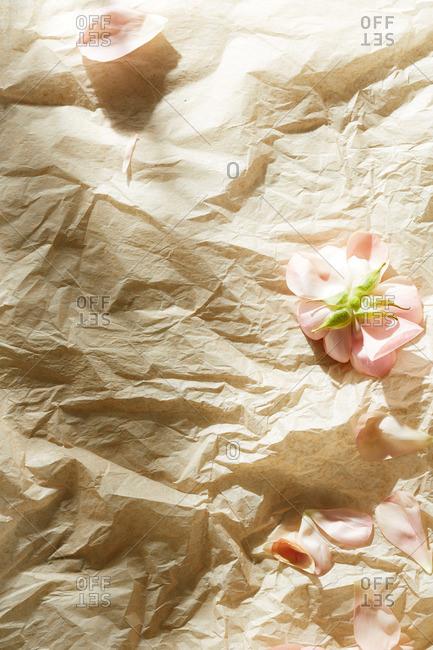 Pink garden rose petals on beige tissue paper surface