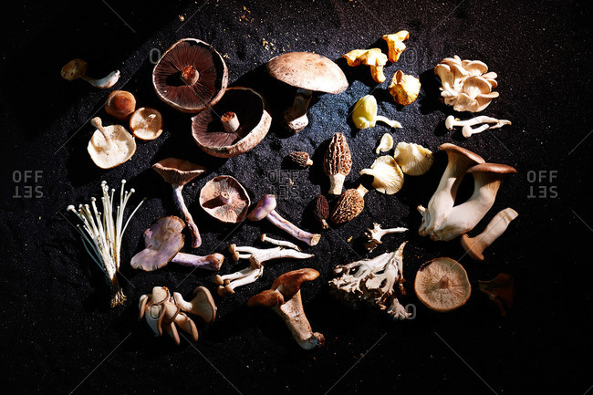 Various cultivated and wild mushrooms on black sand surface
