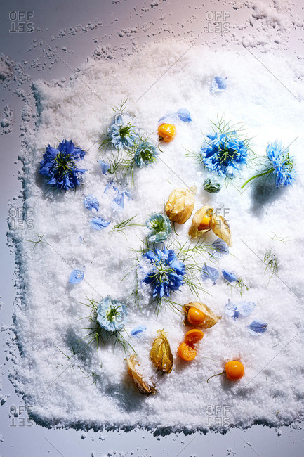 Blue nigella blossoms and gooseberry pods on rock salt surface