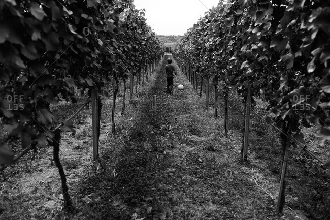 Boy playing in a vineyard with a soccer ball