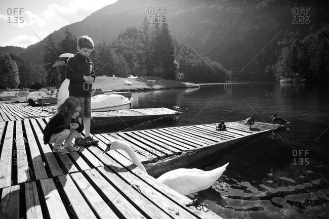 Children admiring a swan on a lake in Austria