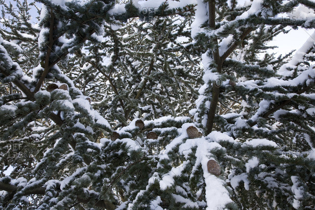 Low angle view of trees covered in snow