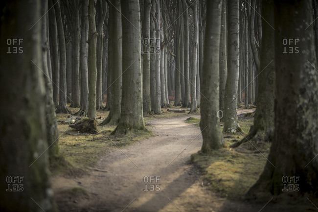 Forest track at Gespensterwald