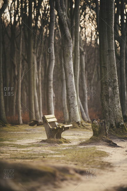 Empty bench in the woods, Nienhagen