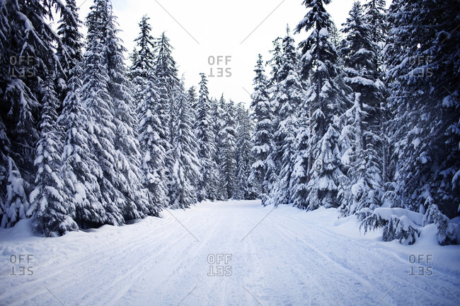 Snow covered path between trees