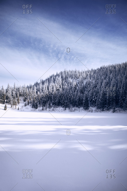 Undisturbed snow field and snow covered trees