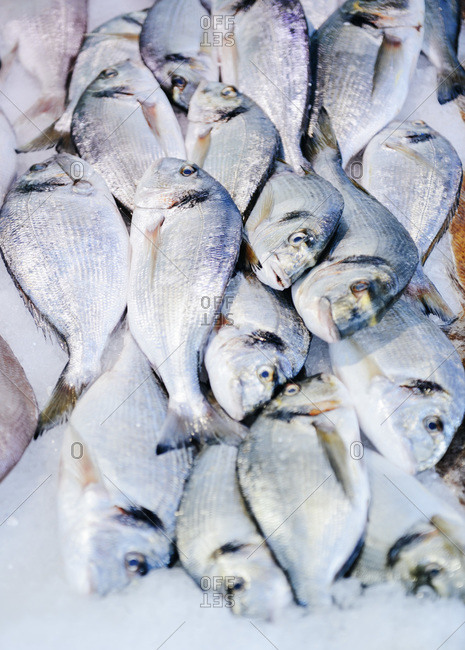 Gilt-head bream in a market