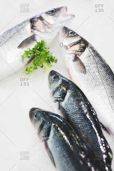 Sardines in a market